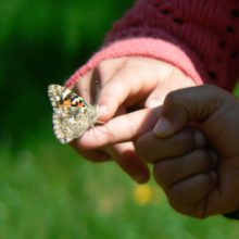 butterfly on child hand